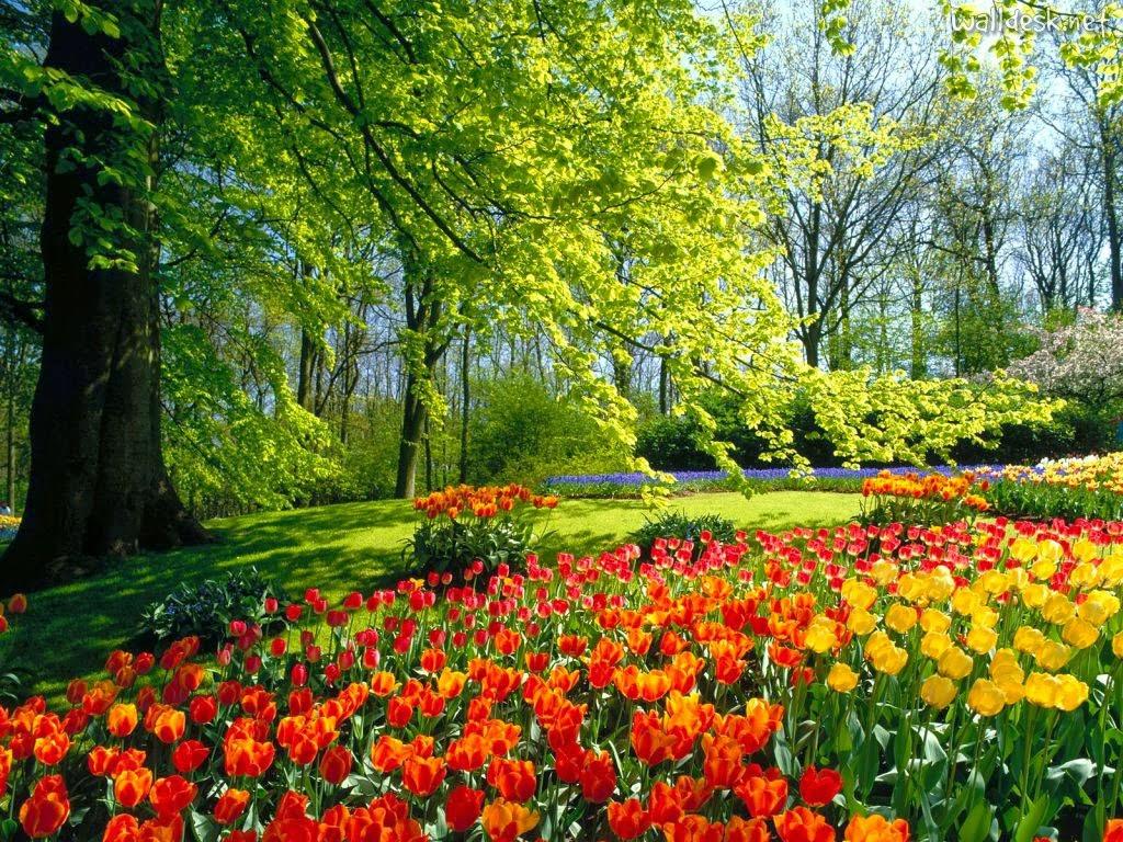 Resultado de imagem para fotos de jardins com flores