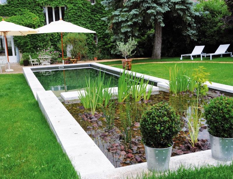 Piscinas biol gicas naturais siagutatemp for Plantas para piscinas