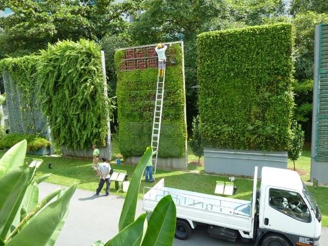 Tend ncia mundial verde em destaque subindo pelas for Plantas para muros verdes exteriores